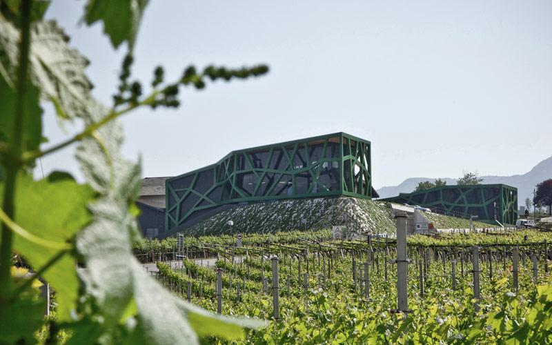 i migliori vini bianchi dell'Alto Adige